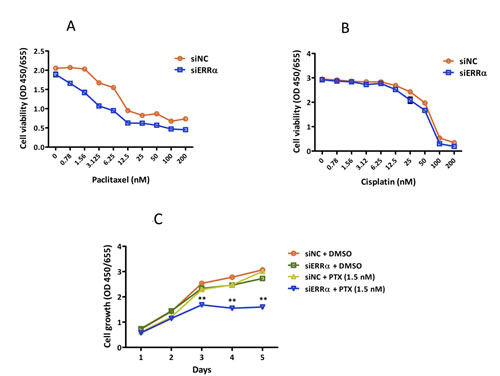 Effect of ERRα knockdown on the sensitivity of endometrial cancer cells to anti-cancer drugs.