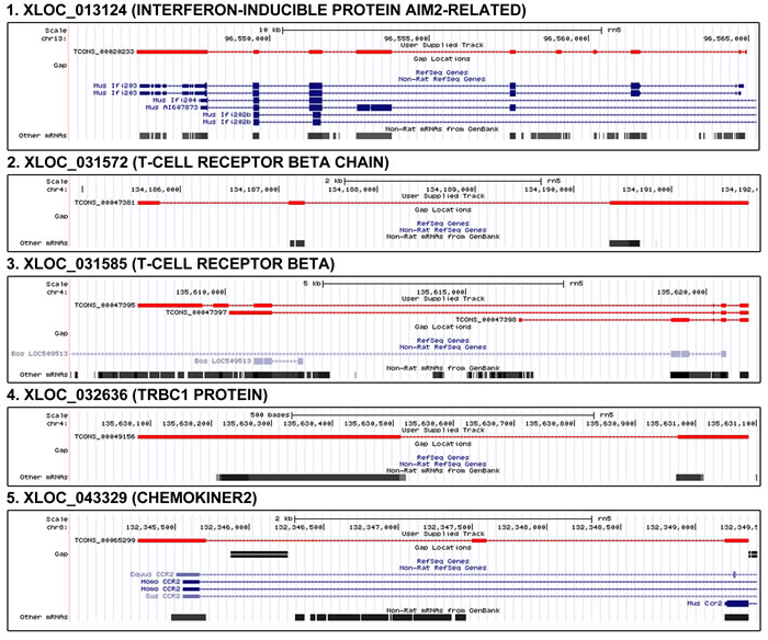 Genomic position and structure of novel genes related to inflammation.
