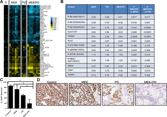 Combination of CDK4/6 and MEK inhibitors induces greater inhibition of phosphorylation of S6 and other growth factor signaling and cell cycle proteins in vivo in PDX models of KRAS mutant CRC.
