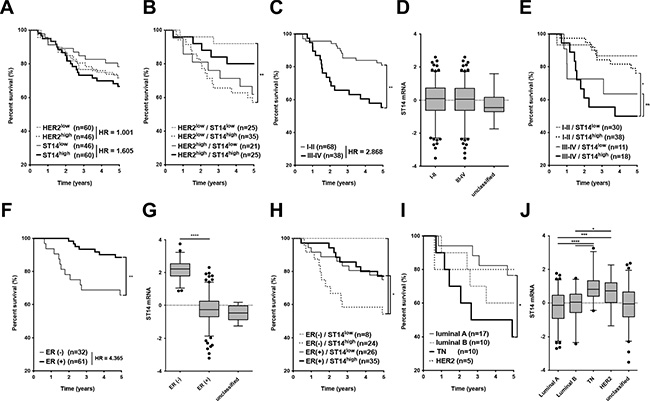 Analysis of survival and ST14/Prss14 expression in the TCGA BRCA dataset.