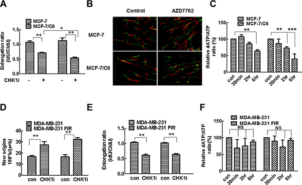 CHK1 inhibition led to the more significant decrease in replication speed and deoxynucleotide supply in MCF-7/C6 cells.