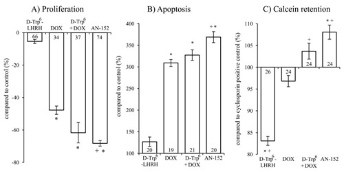 The effect of the treatment with AN-152 (AEZS-108) on the proliferation (A), apoptosis (B) and calcein retention (C) of U-87 MG cells.