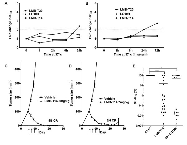 Stability, anti-tumor activity and antigenicity of LMB-T14.