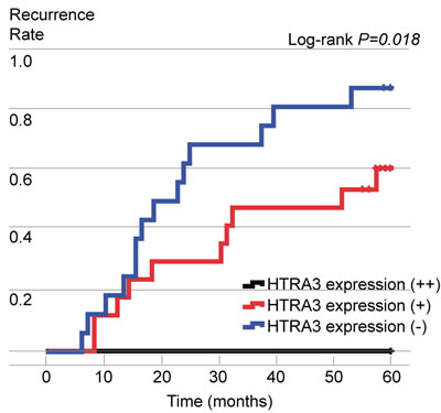 Postoperative recurrence curves of patients in the three groups, stratified according to HTRA3 protein expression.