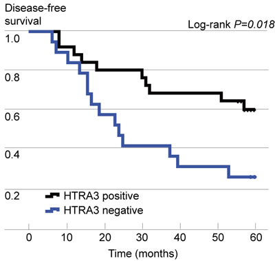 Kaplan-Meier curves of disease-free survival (DFS), stratified according to HTRA3 protein expression.