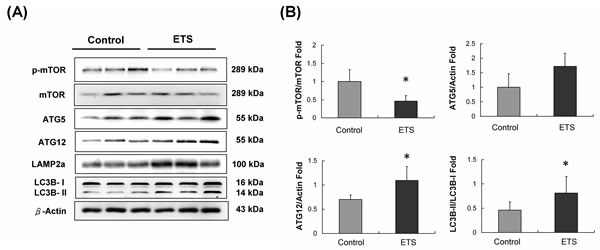 Autophagy initiated protein analysis.
