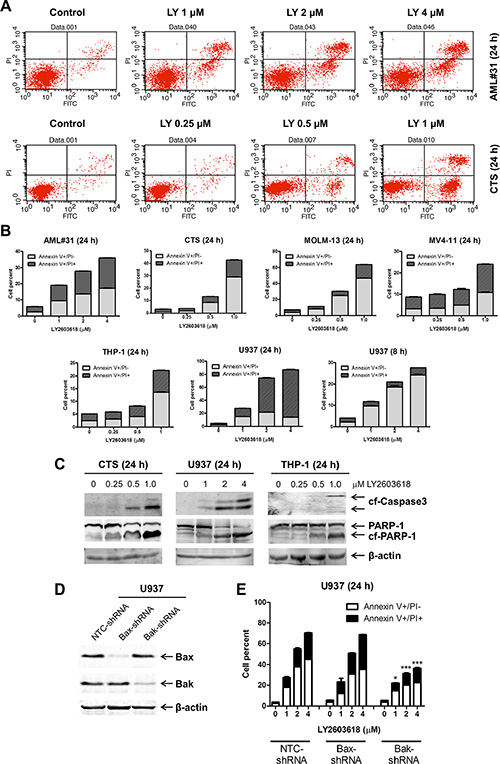 LY2603618 induces apoptosis in AML cell lines and a primary patient sample.