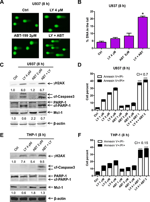 ABT-199 synergizes with LY2603618 in AML cells.