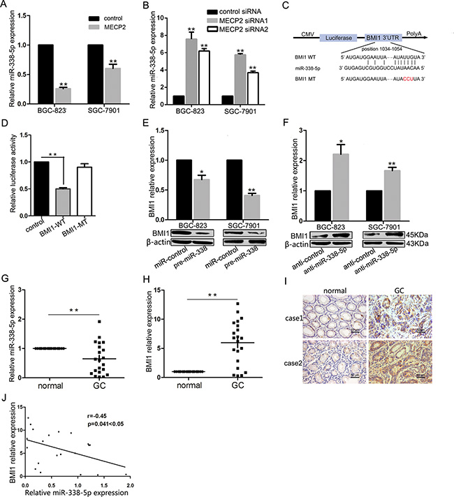 MECP2 suppressed miR-338-5p expression and miR-338-5p could target BMI1.