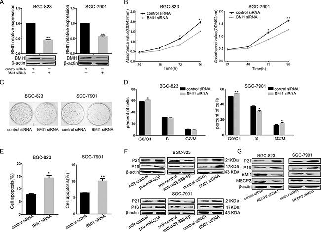 miR-338-5p inhibits cell proliferation through BMI1.