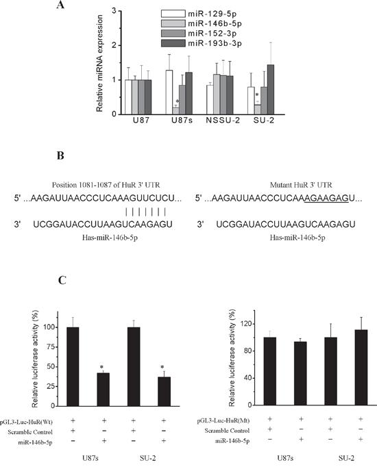 Post-transcriptional regulation of HuR.