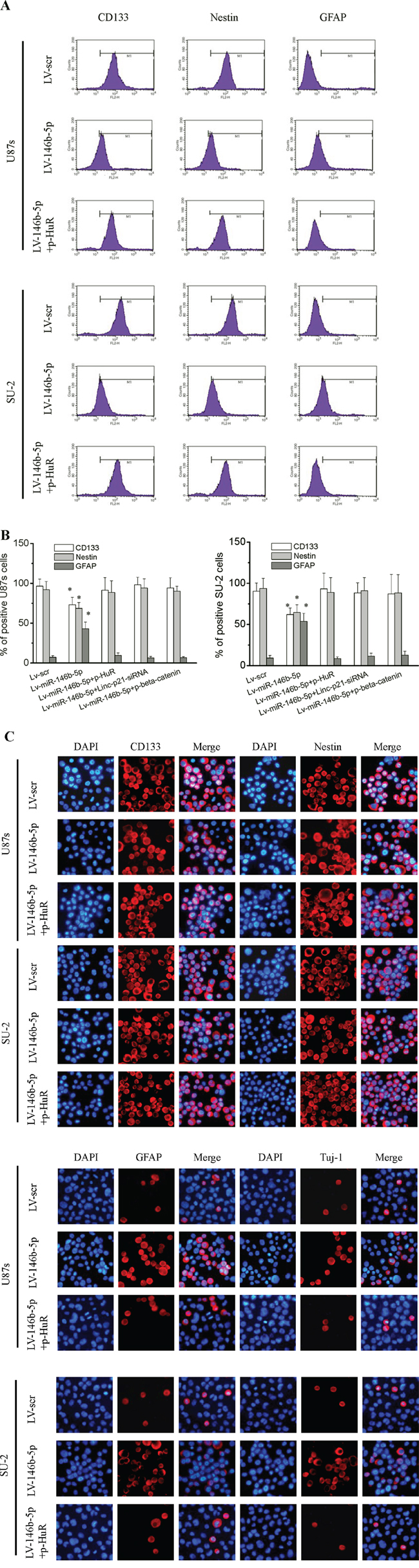 MiR-146b-5p overexpression decreased stemness and induced differentiation in GSCs.