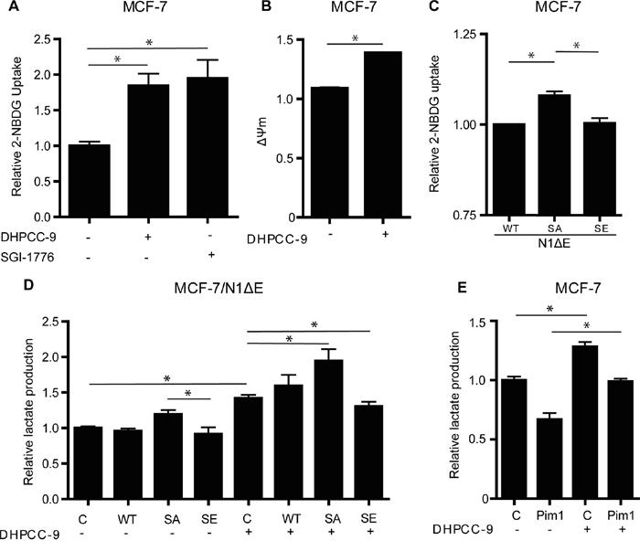 Phosphorylation of Notch1 balances MCF-7 cell metabolism.