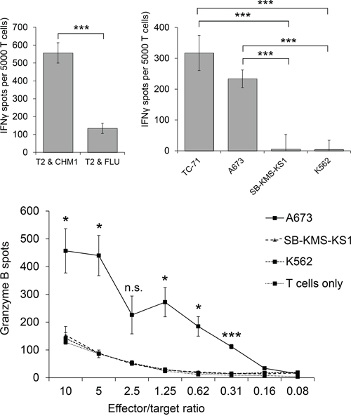 Peptide specificity and HLA-A*02:01-restriction of HLA-A*02:01- CHM1-4B4 TCR-transgenic T cells.