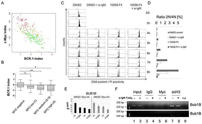 c-Myc is involved in the regulation of cell cycle regulators from the BCR.1 gene cluster.