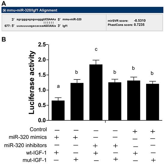 MiR-320 targets IGF-1 gene.