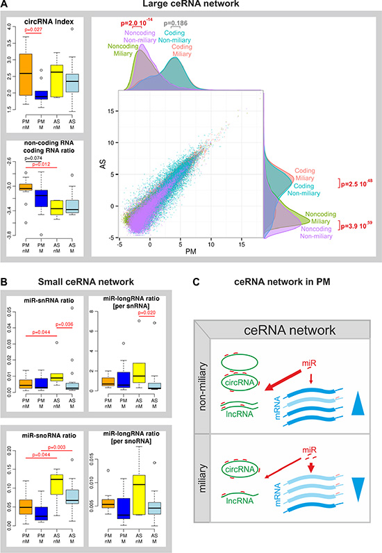 Competing endogenous RNA (ceRNA) network.