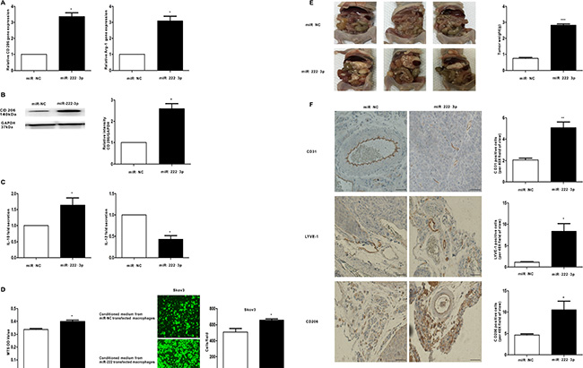 MiR-222-3p promotes M2 phenotype polarization of macrophages in vitro and vivo, which can enhance growth and metastasis of EOC cells.