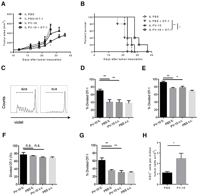 IL injection of PV-10 facilitates the proliferation of tumor-specific CD8+ T cells in M05-bearing mice.