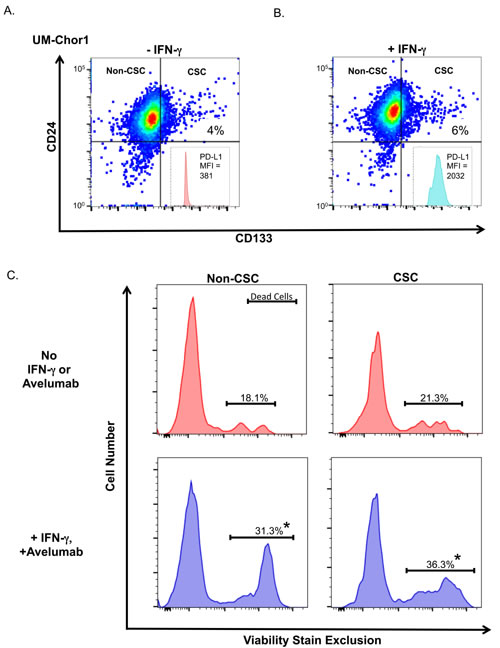 Treating chordoma cells with IFN-γ increases NK-cell killing of both non-CSC and CSC populations