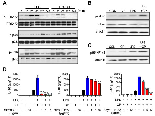 Cisplatin-induced IL-10 production in LPS-activated DCs involved the activation of the p38 MAPK and NF-κB signaling pathways.