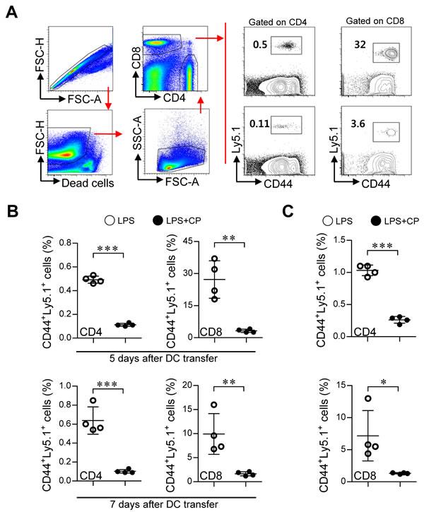 Cisplatin/LPS-primed DCs impaired T cell proliferation