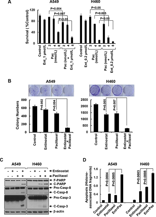 Entinostat significantly enhances paclitaxel-induced growth inhibition and apoptosis in NSCLC cells.