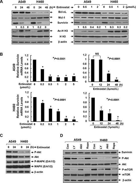 Entinostat reduces both the protein and mRNA levels of Survivin in NSCLC cells without disturbing the PI-3K/Akt and MEK/MAPK signaling pathways.