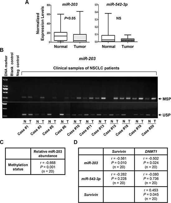 The expression levels of miR-203, but not miR-542-3p, are significantly increased, associated with miR-203 promoter hypermethylation, and inversely correlated with the expression of DNMT1 and Survivin in NSCLC tumors.