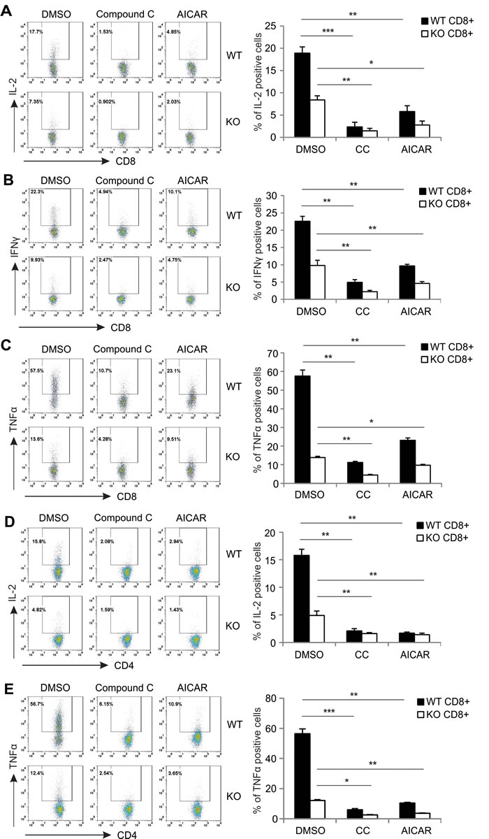 AICAR and Compound C inhibit cytokine production in PMA/Ionomycin-activated T cells.