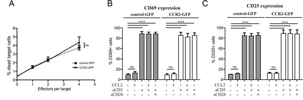 Chemokine receptor transduction does not affect killing capacity or activation state of CD8