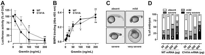 GremlinC141A retains its BMP-antagonist activity.
