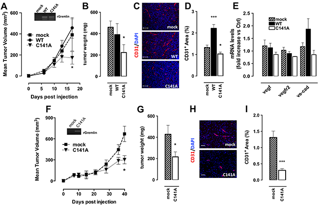 GremlinC141A reduces the tumorigenic and angiogenic potential of EO771 cells.