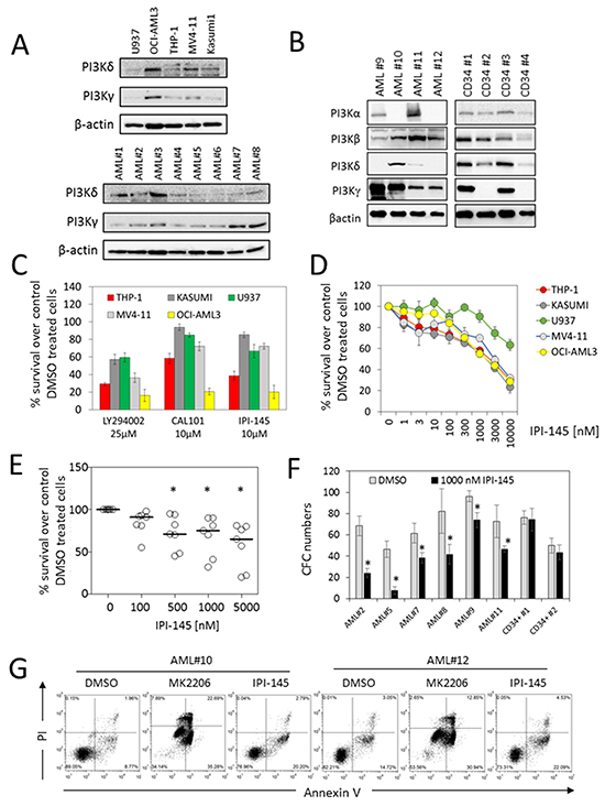 Targeting PI3K inhibits AML survival in AML cell lines and primary AML blasts.