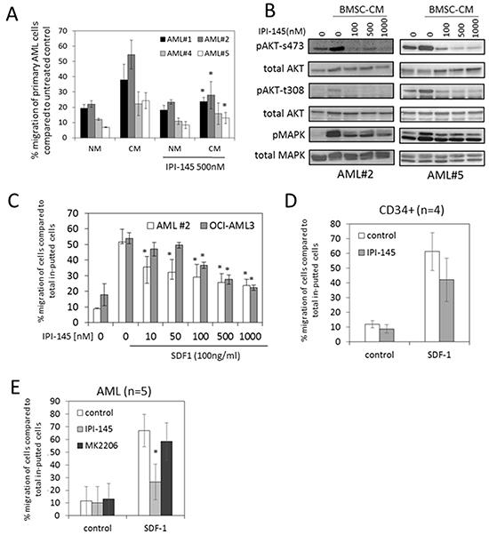 IPI-145 inhibits AML migration to BMSC.
