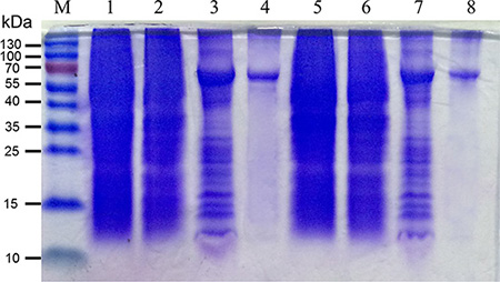 Production and characterization of mBPI5 and Asp190Ala mutant.