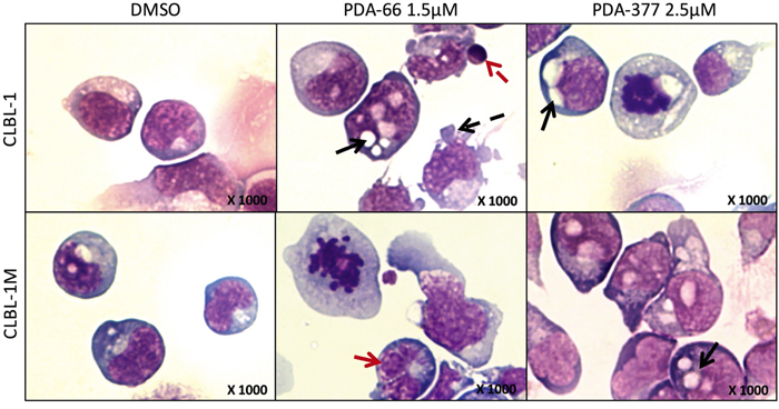 The morphological changes after PDA-66 and PDA-377 treatment.