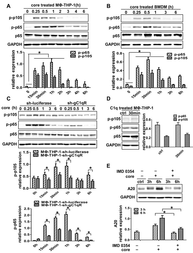NF-κB signaling pathway plays critical role in the induction of A20.