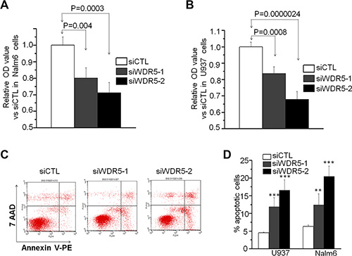 WDR5 knockdown induces proliferation arrest and cell apoptosis in ALL and AML cells.
