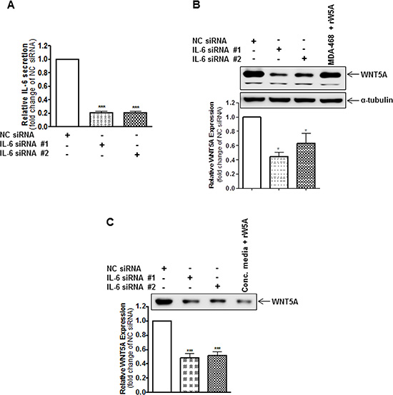 IL-6 knockdown reduces the endogenous protein expression of WNT5A in WM852 cells.