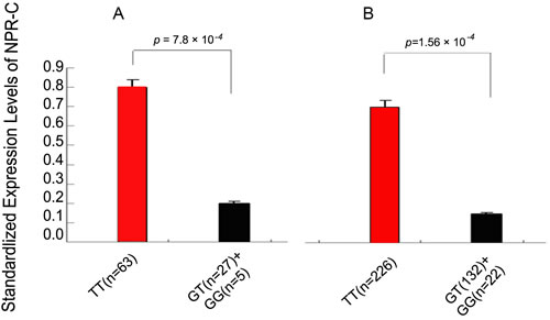 Association of the risk allele G of rs700926 with decreased expression of NPR-C mRNA assuming a dominant model.