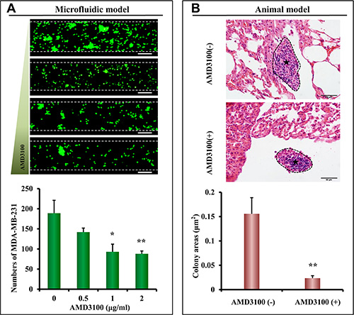 Inhibition of lung metastasis in the microfluidic model and nude mouse model.
