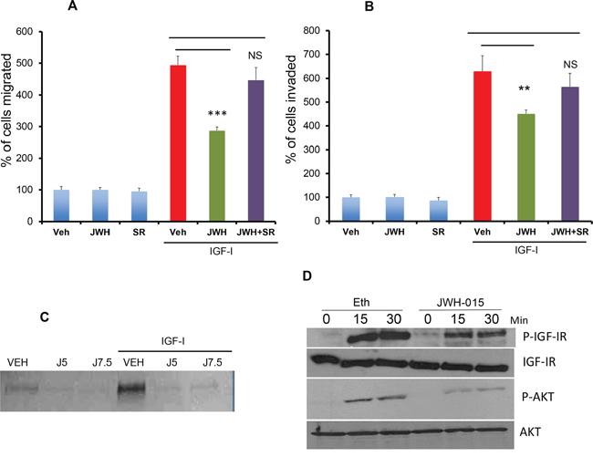 JWH-015 inhibits IGF-I/IGF-IR signaling in ERα+ breast cancer cells.