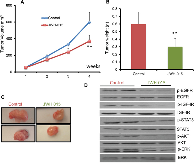 JWH-015 suppresses ERα- breast cancer growth in vivo by inhibiting EGF/EGFR and IGF-I/IGF-IR signaling pathways.