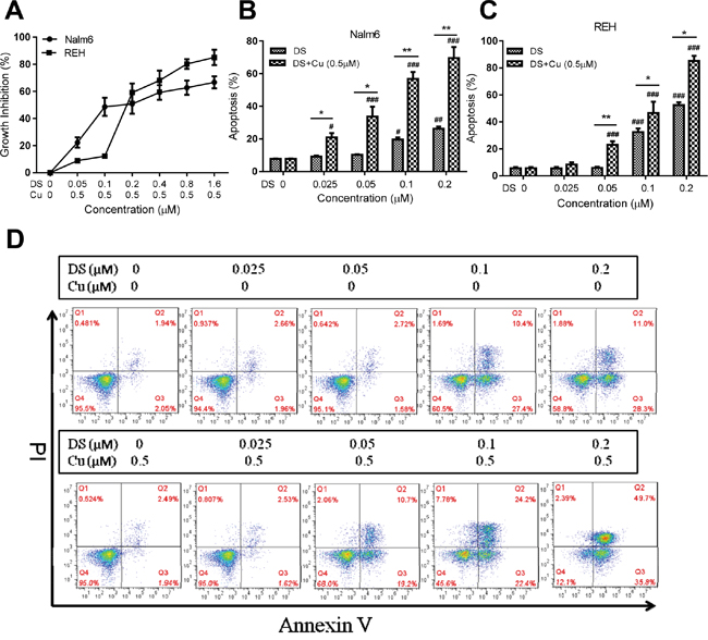 DS/Cu displays dose-dependent cytotoxic effects on human B-ALL Nalm6 and REH cells.