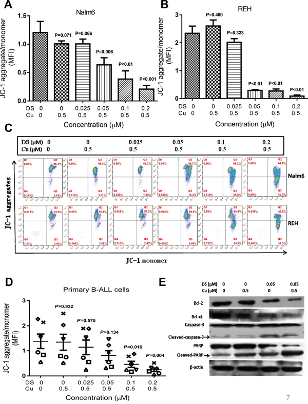 DS/Cu activates the mitochondria-related intrinsic apoptotic pathway in B-ALL cell lines and primary cells.