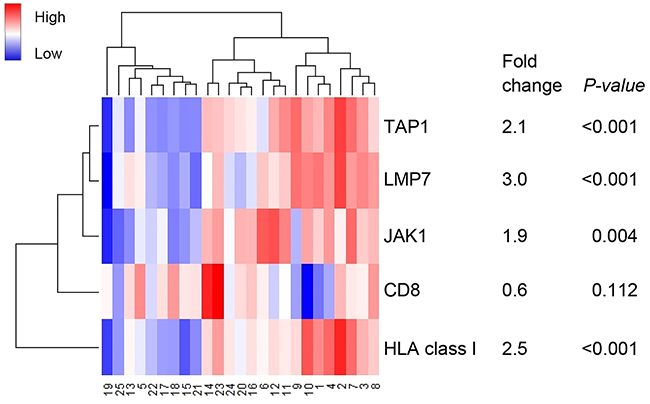 Heatmap of RNA expression of genes encoding for antigen machinery components.