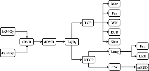Flow chart of the radiobiological modeling.