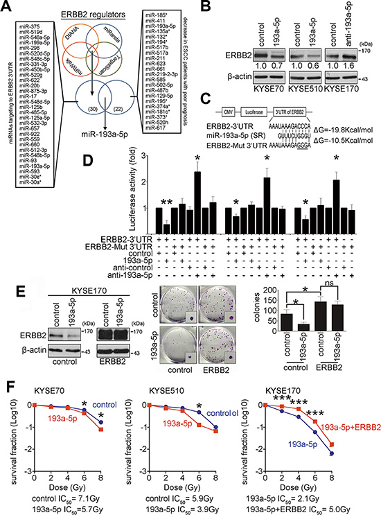 Down-regulation of ERBB2 is regulated by miR-193a-5p to enhance radiosensitivity.