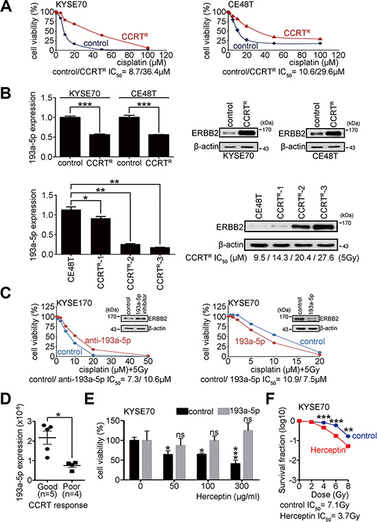 Overexpression of miR-193a-5p decreases ERBB2 expression and enhances the CCRT response in ESCC.